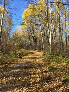 Fall afternoon on the new Trans Canada Trail to Cabin Lake