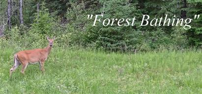 Forest bathing 1
